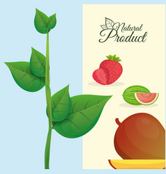 natural product fruit poster vector image vector image
