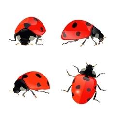 Set of hand drawn ladybugs ladybirds vector image