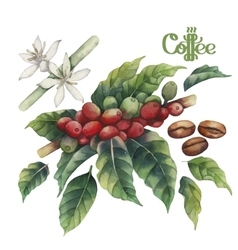 Watercolor coffee collection vector
