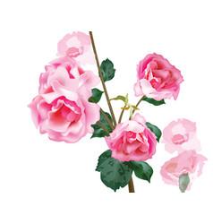 watercolor vintage roses bouquet floral vector image