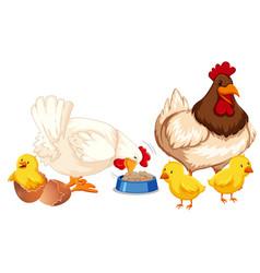 a happy chicken family vector image