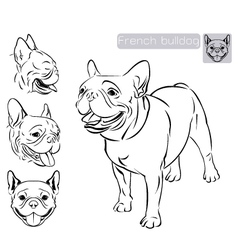 Line art French Bulldog vector image