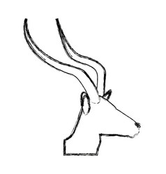 Portrait head impala africa mammal wild vector