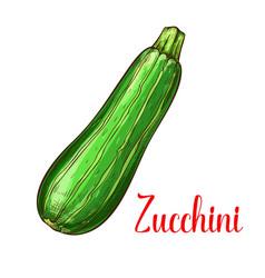 Zucchini squash sketch vegetable icon vector