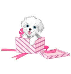 Dog in box vector image vector image