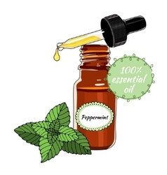 Bottle of peppermint essential oil with dropper vector