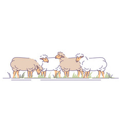 Flock sheeps on pasture flat livestock vector