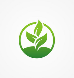 green leaf icon organic beauty vector image