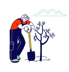 Male pensioner planting tree aged man in overalls vector