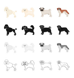 poodle lapdog bulldog and other web icon in vector image