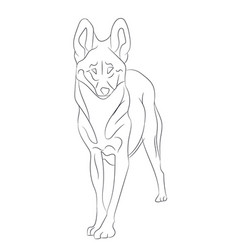 wolf lines vector image