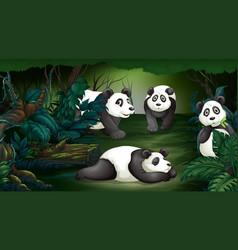 panda in dark forest vector image