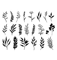 Set black branches and herbs vector