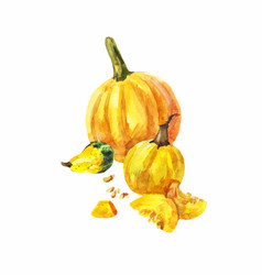 Still-life with three yellow pumpkins on a white vector