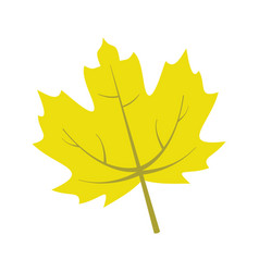 yellow maple leaf graphic vector image