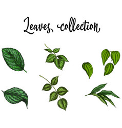 Set of realistic green leaves collection isolated vector