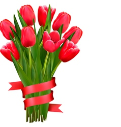Celebration background with red tulips and ribbons vector image