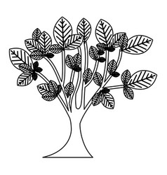 Sketch silhouette leafy tree with trunk nature vector
