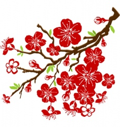 Cherry blossoms vector