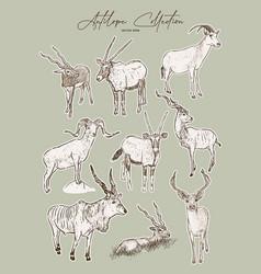 Set antelopes hand drawn sketch animals vector