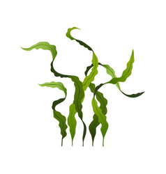 Spirulina seaweed healthy food undersea algae vector