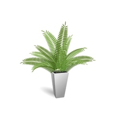 Ornamental plant Fern in a pot vector image vector image