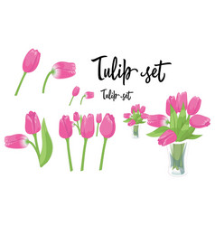 a set of pink tulip flowers vector image
