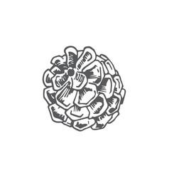 Hand drawn christmas round strobile vector