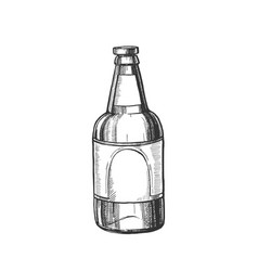 hand drawn classic glass bottle of beer vector image
