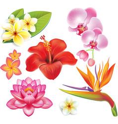 Set tropical flowers vector