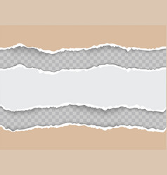 torn paper with ripped edges realistic vector image