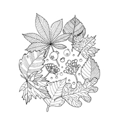 Tree leaves coloring book vector