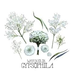 Watercolor gypsophila set vector