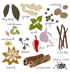 stylized spices vector image vector image