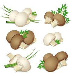 set of champignon vector image vector image