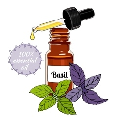 Bottle of Basil essential oil with dropper vector