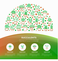 cactus and succelents in pots concept vector image