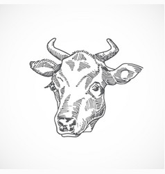 Cow face hand drawn abstract vector