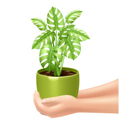Holding A Houseplant vector