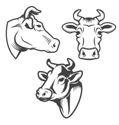 bull head emblem isolated on white background vector image
