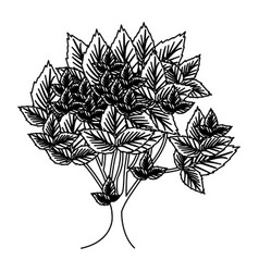 sketch silhouette leafy tree with several leaves vector image vector image