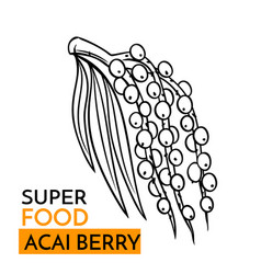Icon superfood acai berry vector