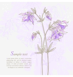 Romantic background with violet aquilegia vector image