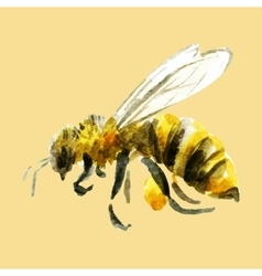 Watercolor hand drawn bee vector