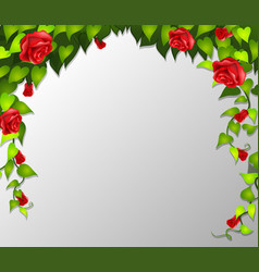 a red rose frame vector image
