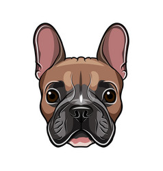 french bulldog head isolated on white vector image