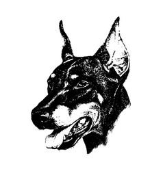 hand draw n doberman dog vintage vector image