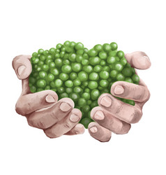 handful-pea-hand-painted vector image