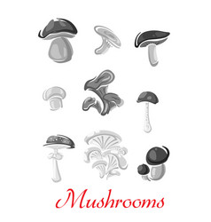 mushrooms champignon chanterelle icons vector image