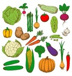 Retro colored sketched vegetables for food design vector image